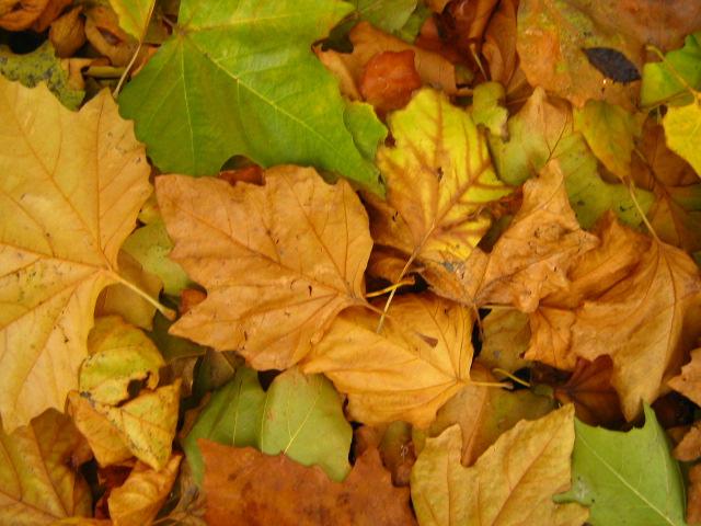 oct 13 autumn 012